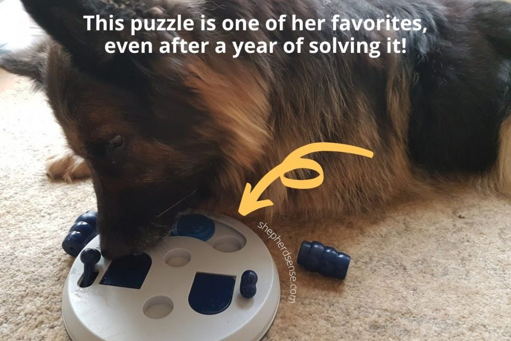 my german shepherd playing with her puzzle