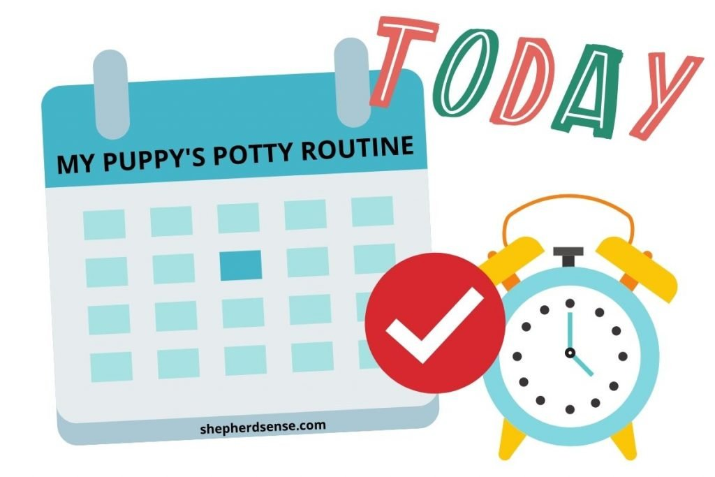 train your german shepherd puppy to a potty routine