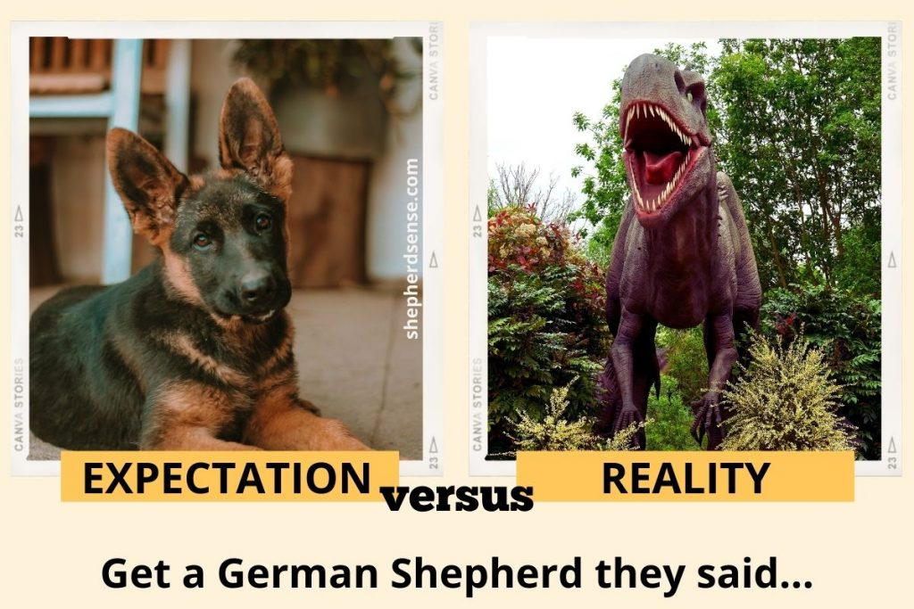 what to expect as a first time german shepherd owner