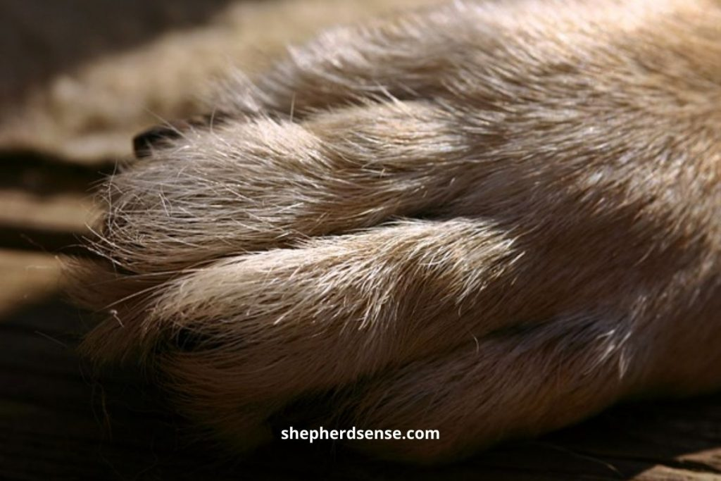 keep your dog's nail trimmed