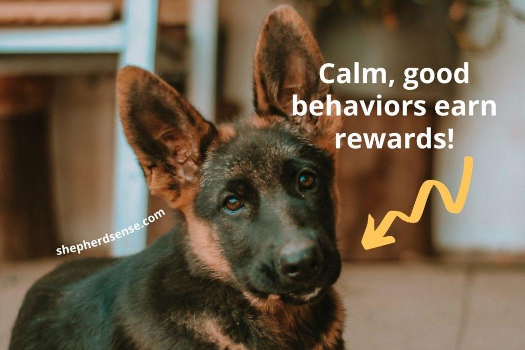 reward german shepherd good behavior during training