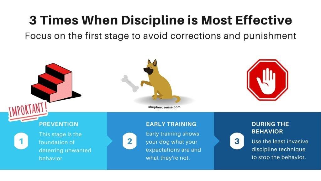 3 keys times when disciplining your german shepherd puppy is most effective