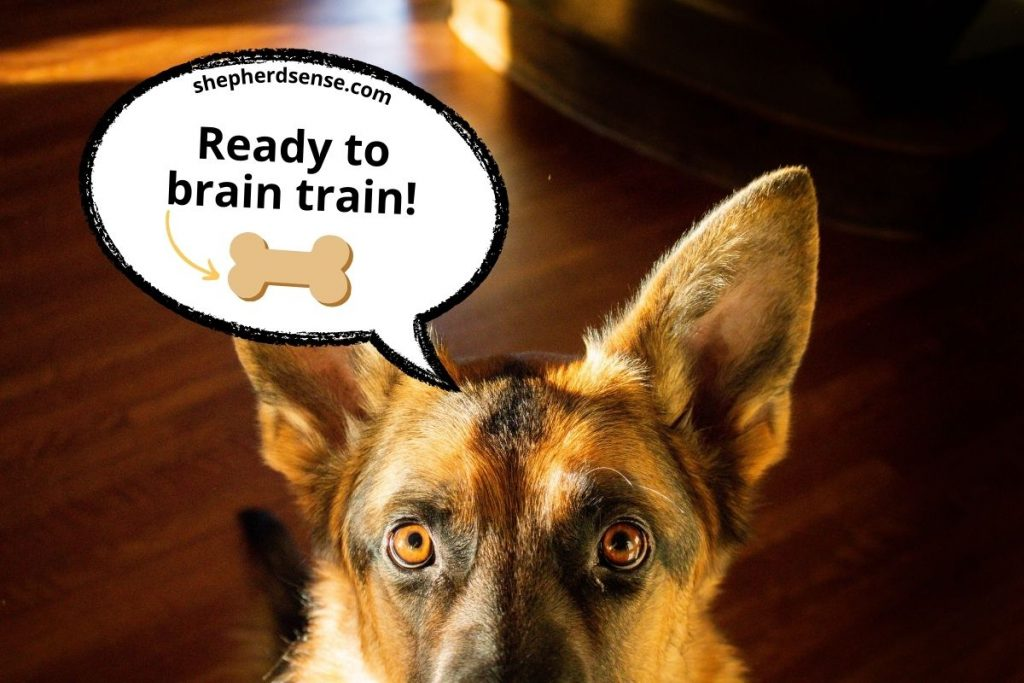 brain game training by teaching a new trick