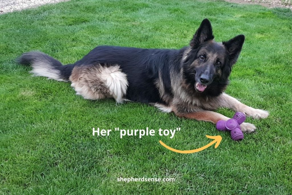 braing training name game for gsd
