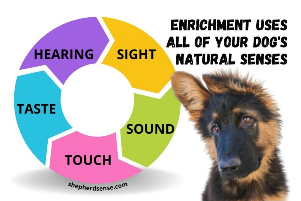 enrichment uses all of your dog's senses