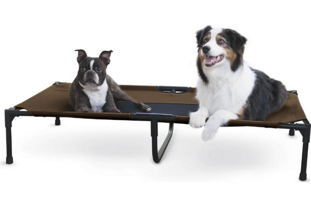chew-resistant elevated dog bed