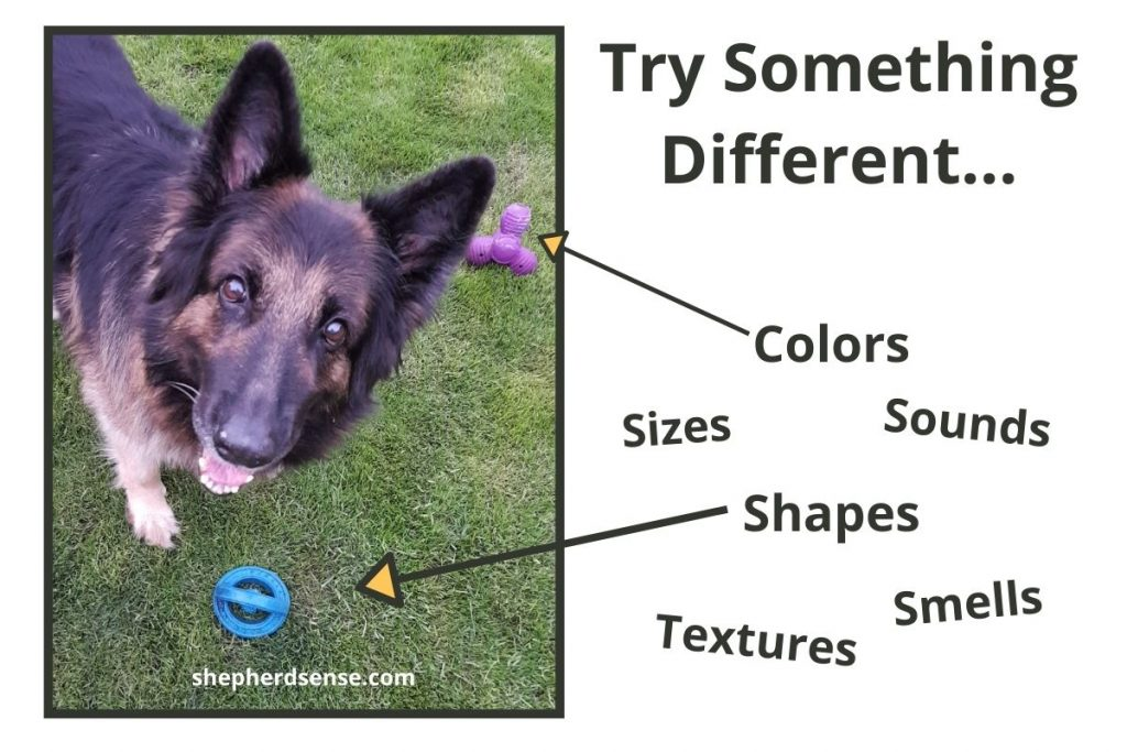different toys for enrichment and stimulation