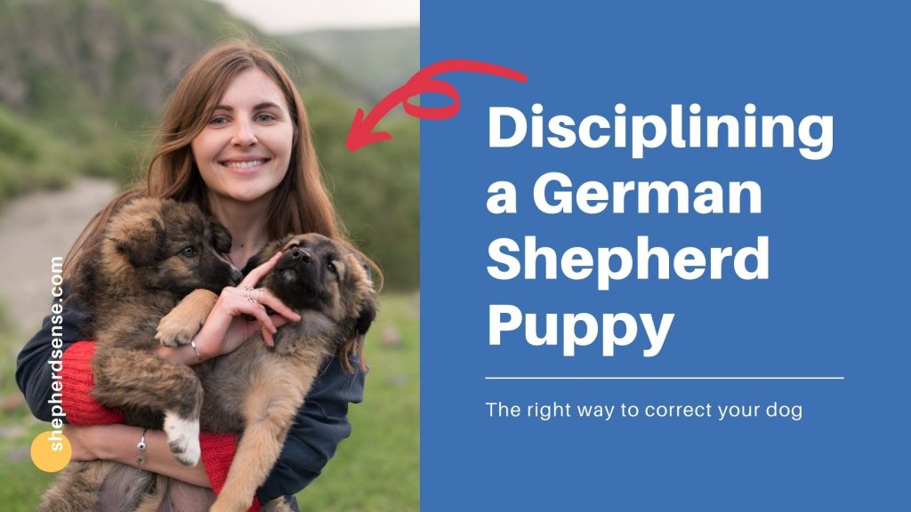 how to discipline a german shepherd without force