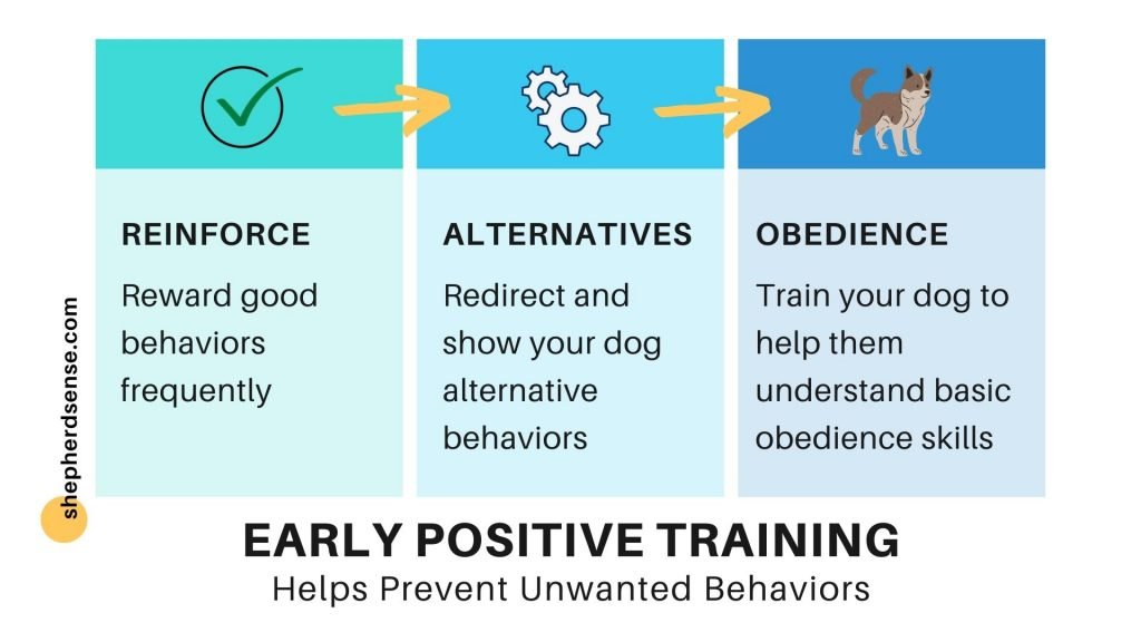 early positive training helps prevent unwanted or bad behaviors