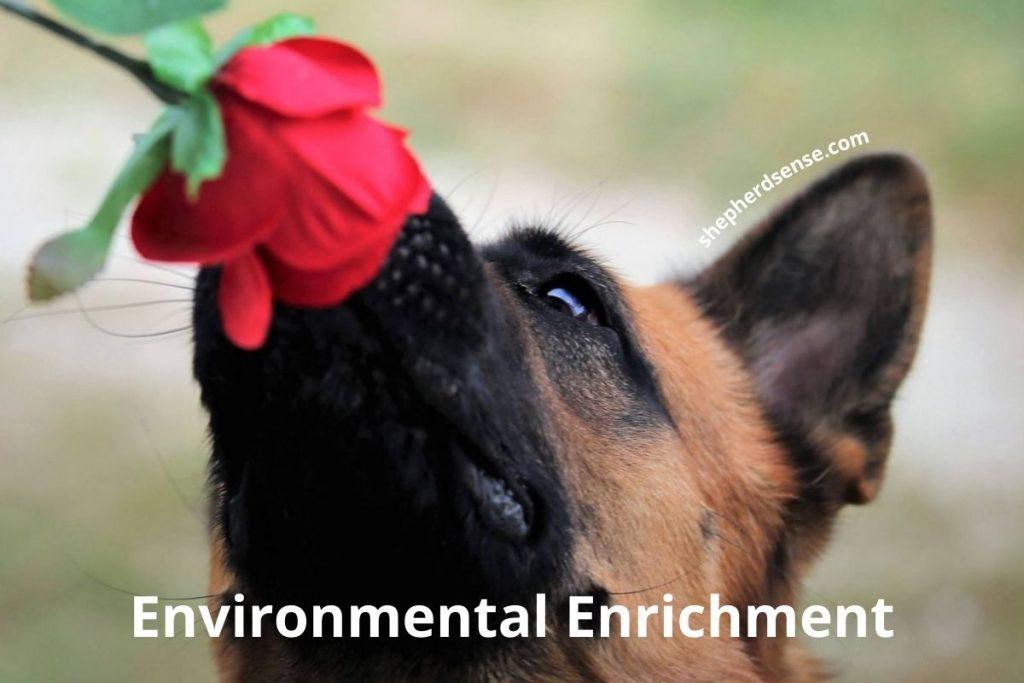 environmental enrichment for your german shepherd