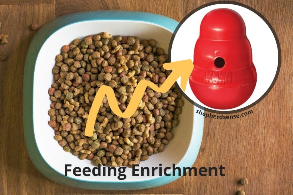 feeding and food-based enrichment ideas for your german shepherd