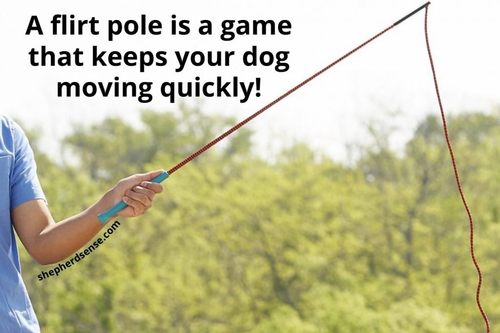 flirt pole game with your german shepherd for exercise
