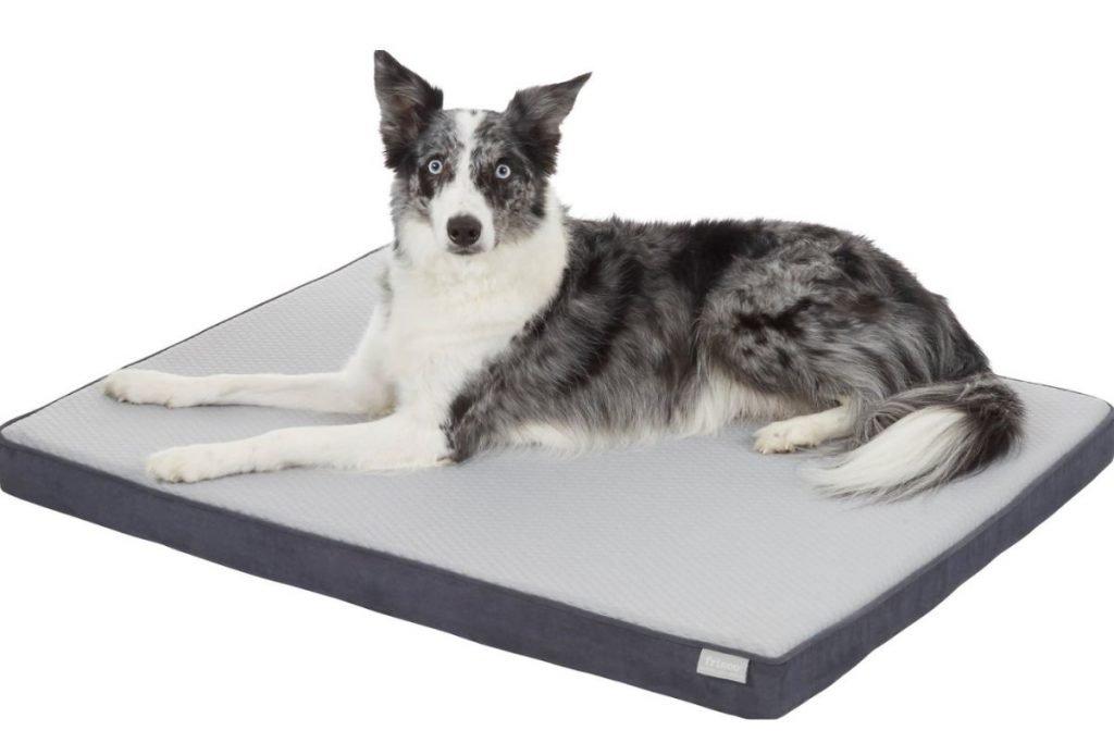 frisco cooling dog bed large