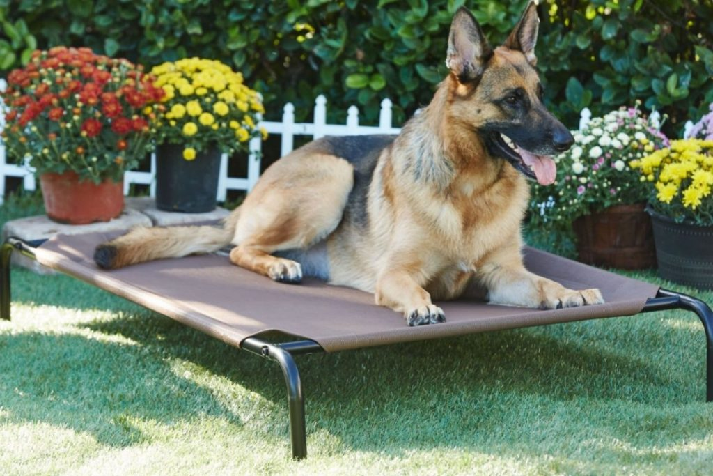 frisco elevated dog bed for a german shepherd