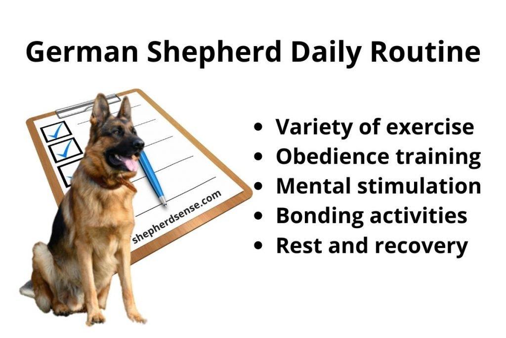 german shepherd daily routine