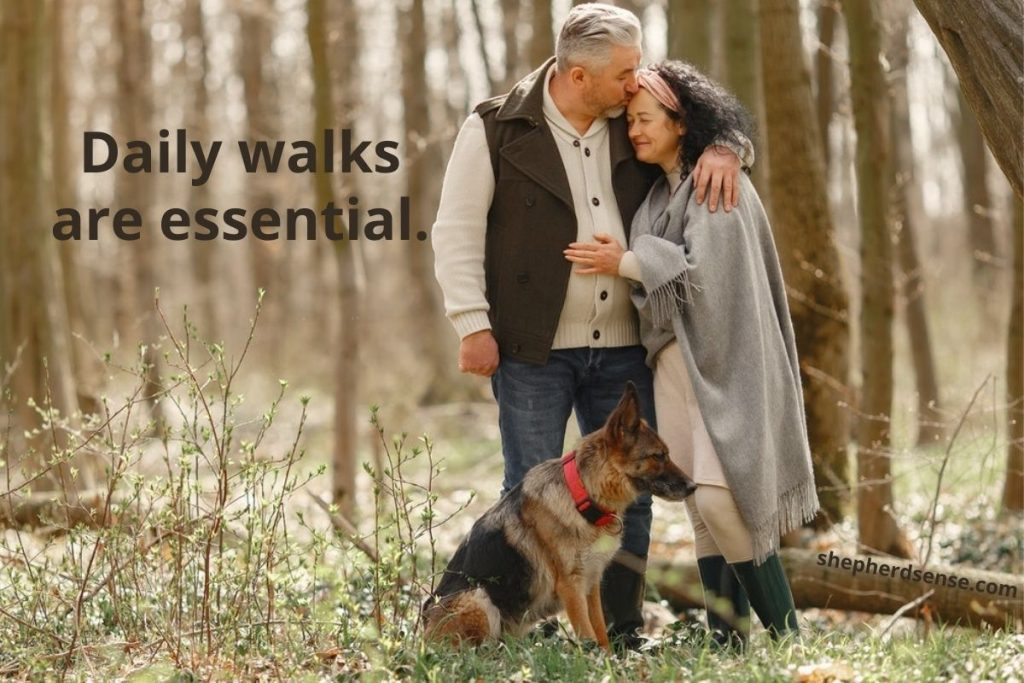 german shepherd daily routine includes plenty of walks