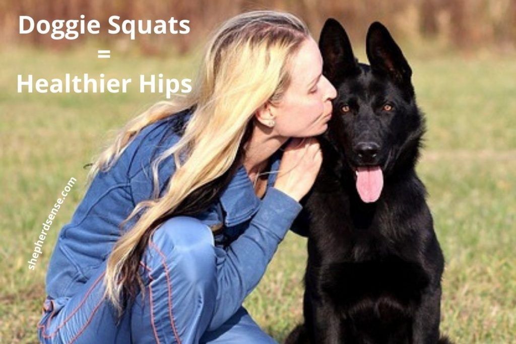 german shepherd dog squats for healthy hips