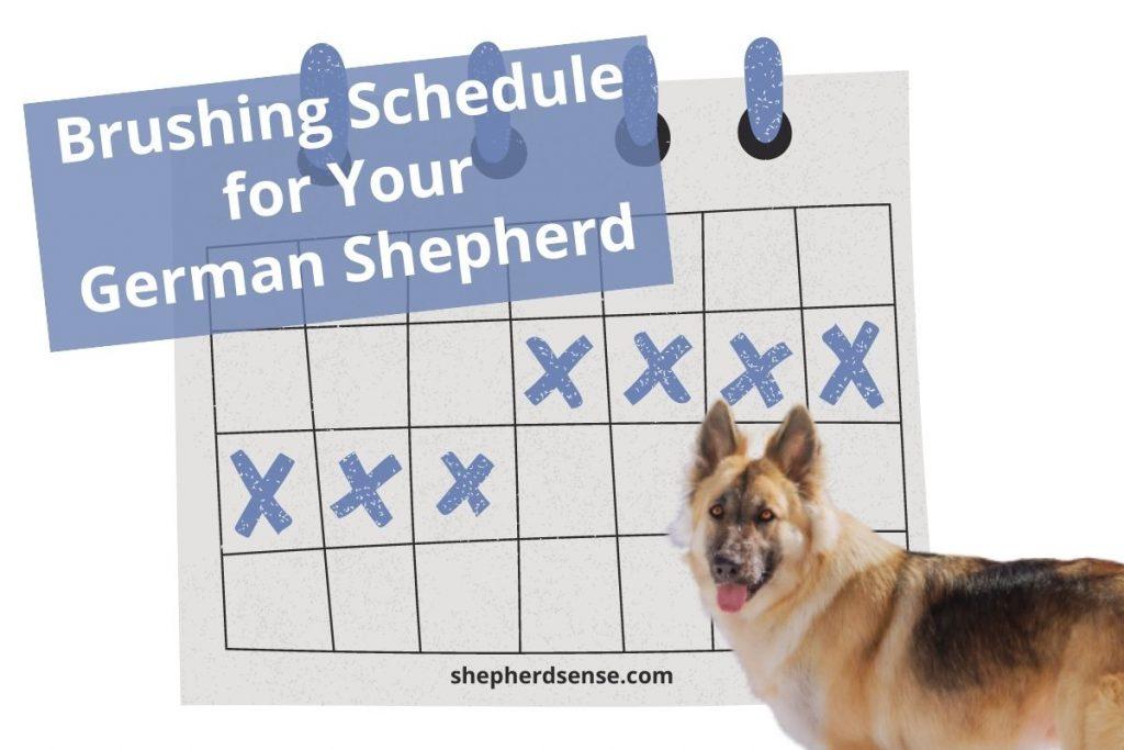 german shepherd puppy and adult brushing schedule