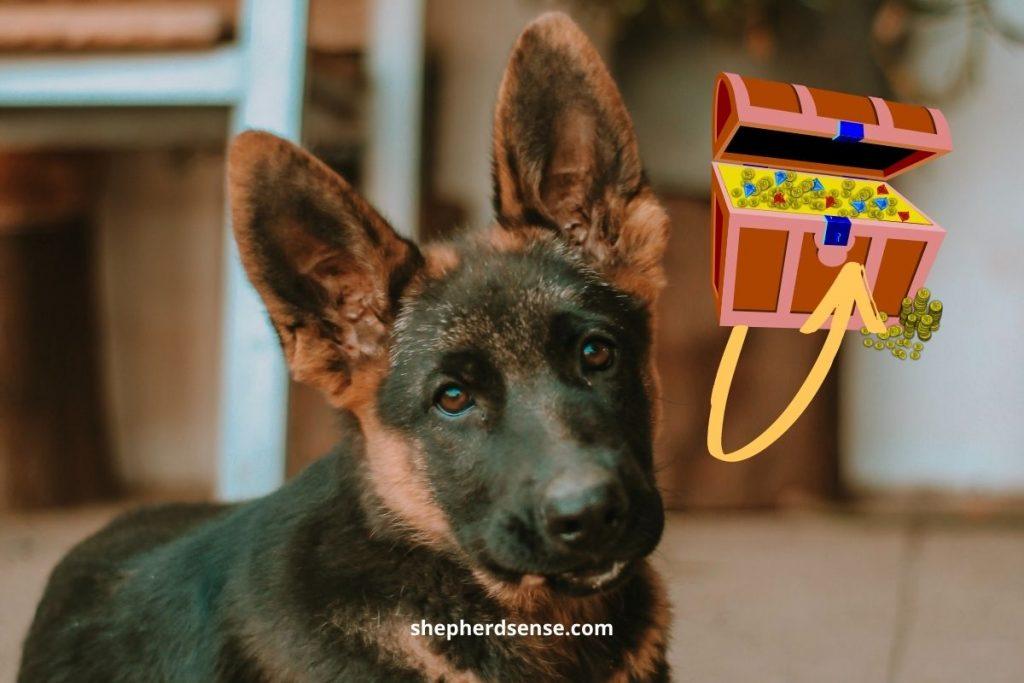 german shepherd puppy treasure hunt brain game