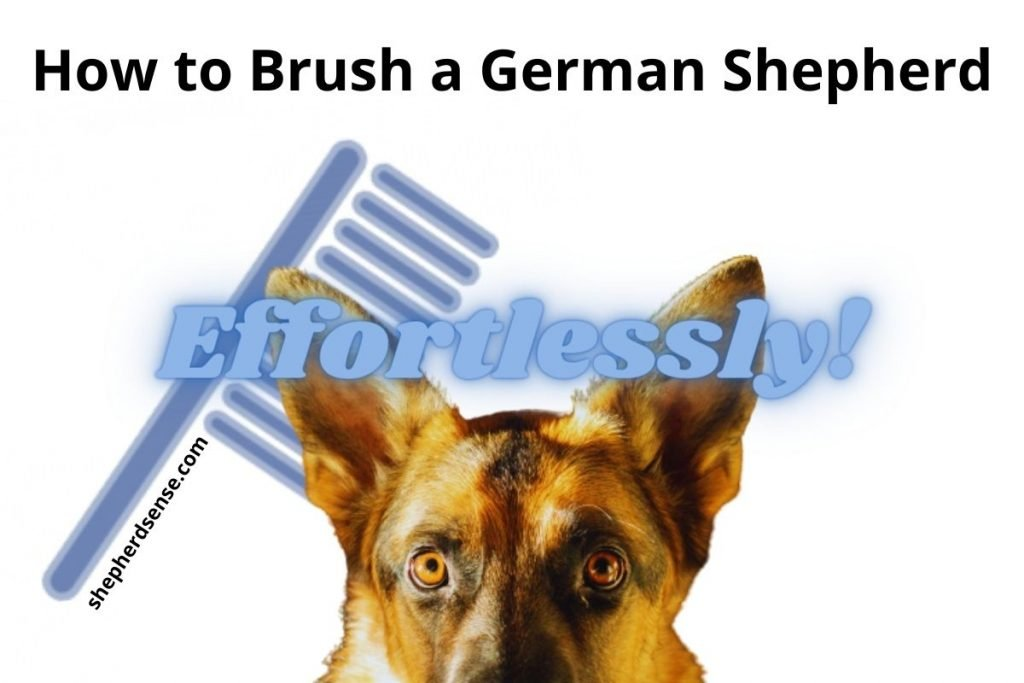 how to brush a german shepherd easily at home