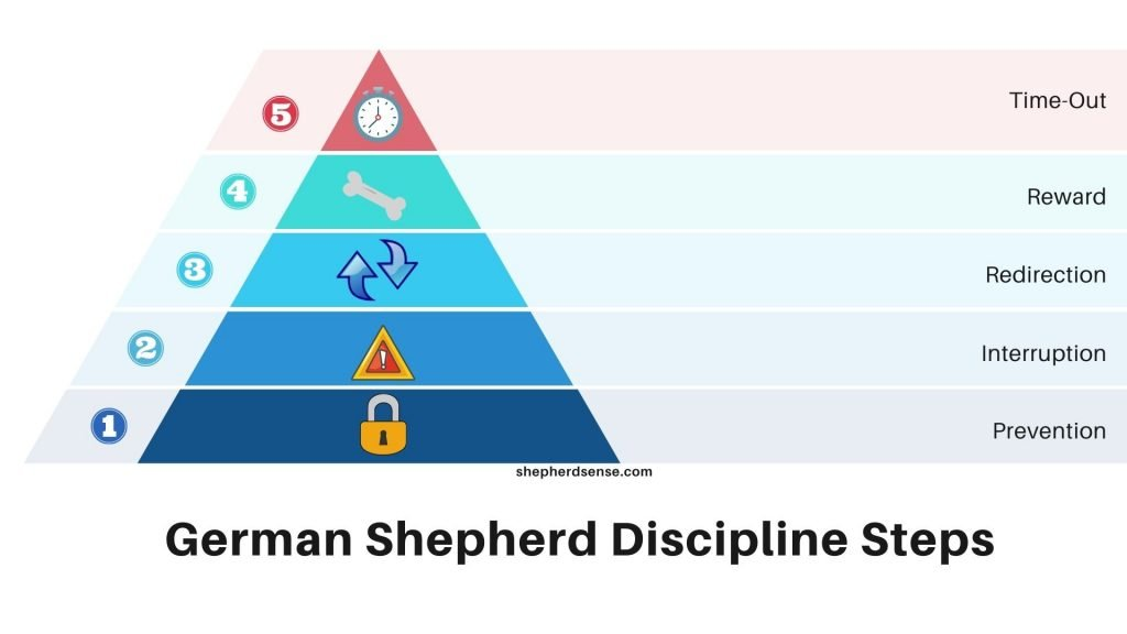 how to discipline a german shepherd puppy or adult