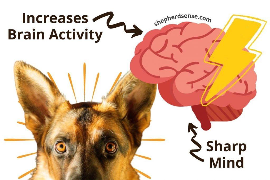 mental enrichment keeps your german shepherds' mind sharp