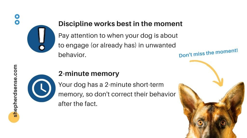 discipline must occur within a short time frame for your gsd