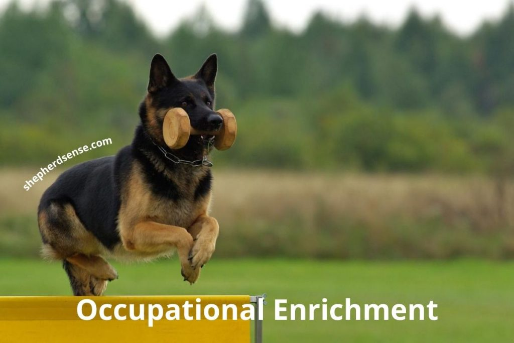 occupational enrichment for a german shepherd