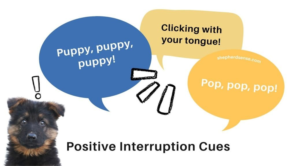 using a positive interruption cue to discipline a gsd puppy