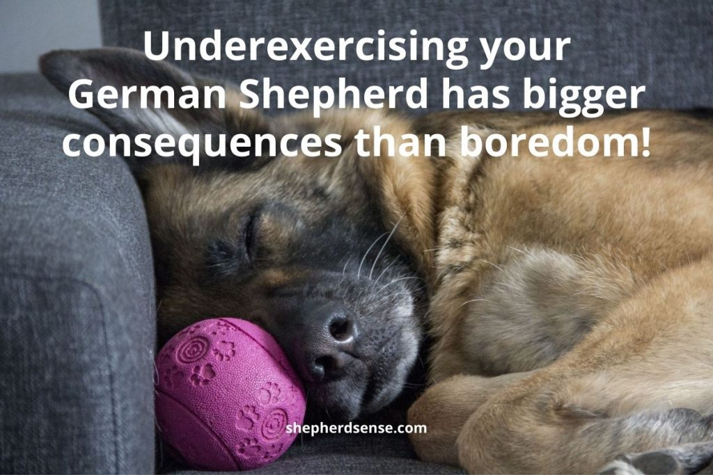 problems of not having a daily routine for your german shepherd