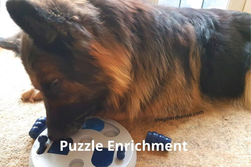 puzzle enrichment for mental stimulation for a gsd