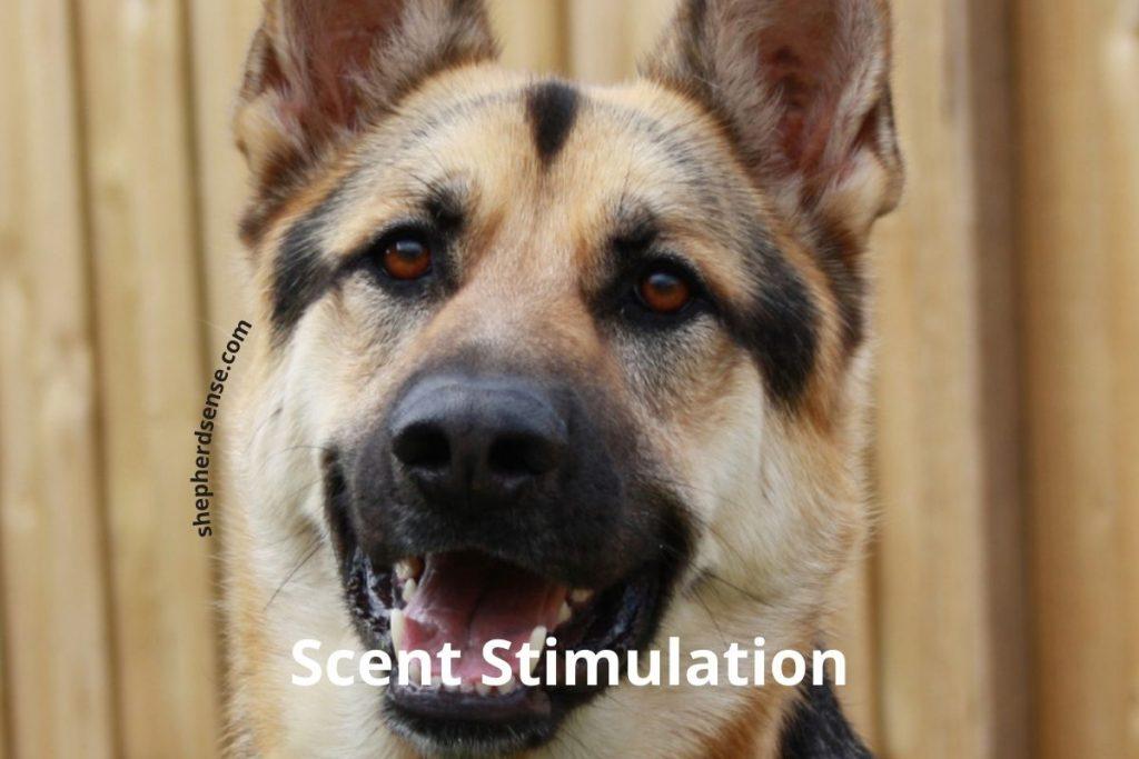scent (olfactory) stimulation for enrichment