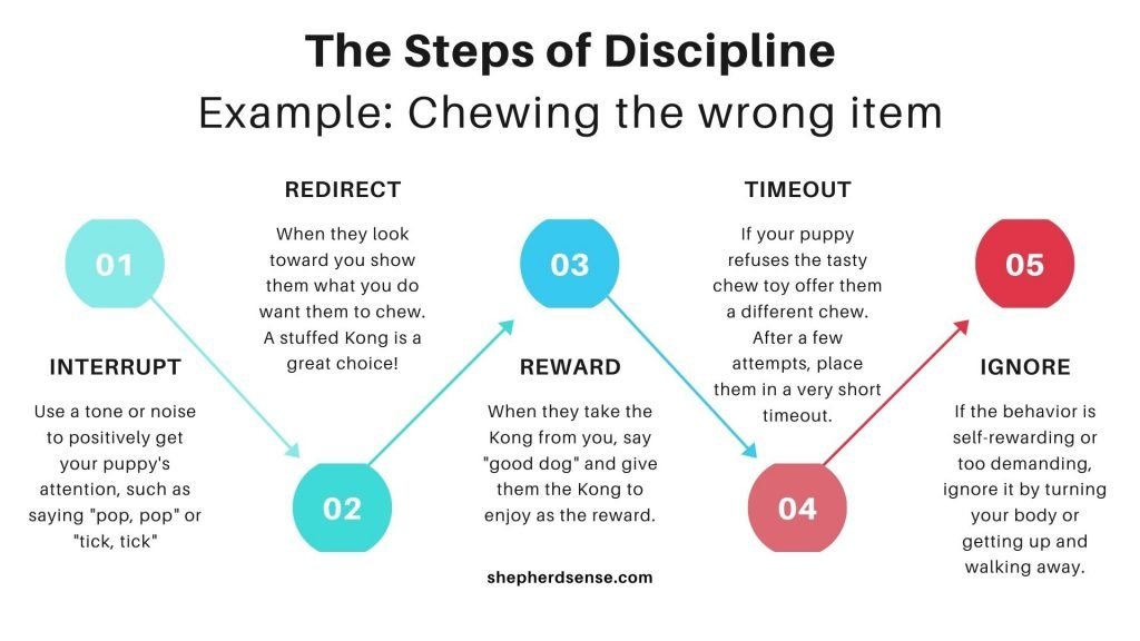 the steps of discipline visual checklist for correcting your gsd