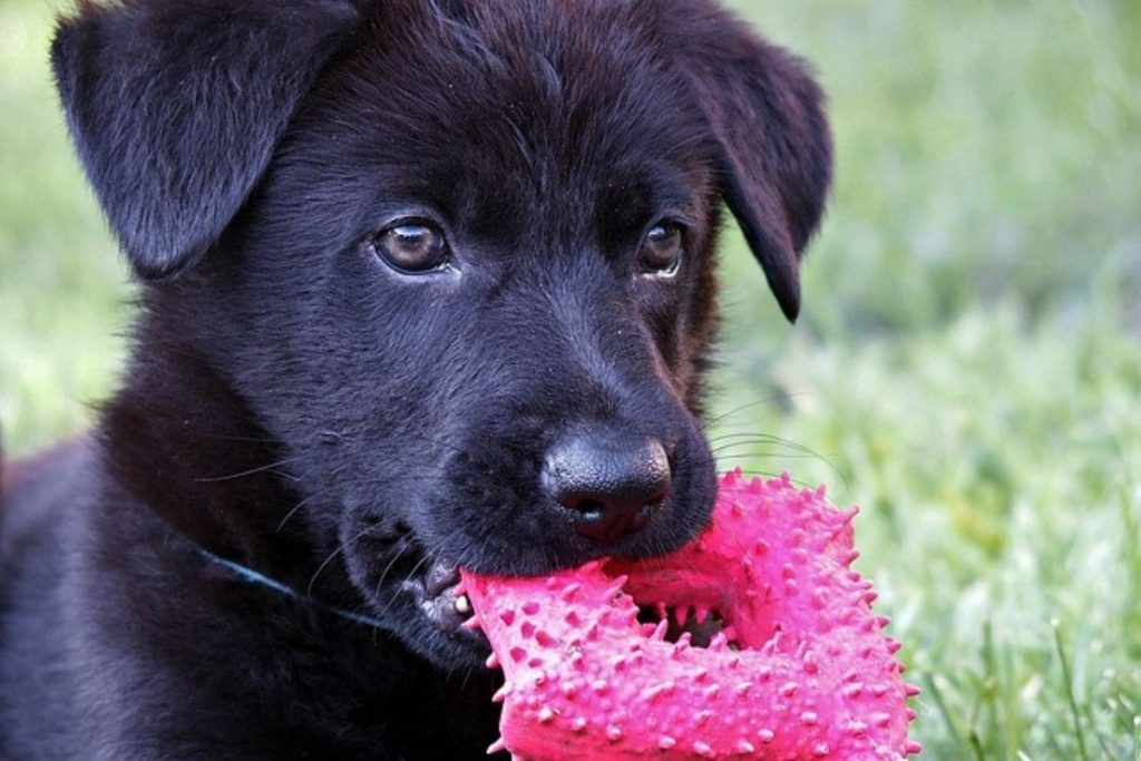 tips on how to discipline a german shepherd puppy