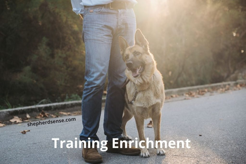 training enrichment for dogs