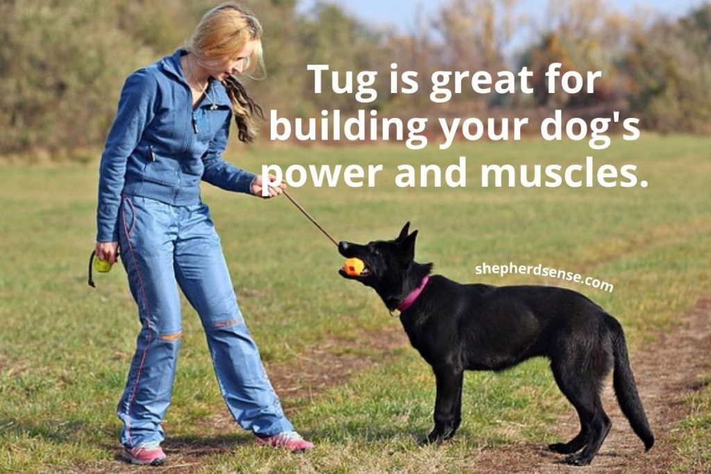 tug exercise routine gives your german shepherd more strength and power
