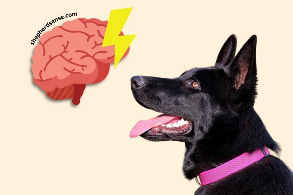 what are mind games for german shepherds