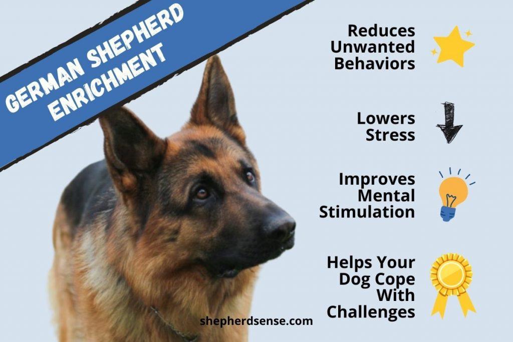 what is german shepherd enrichment