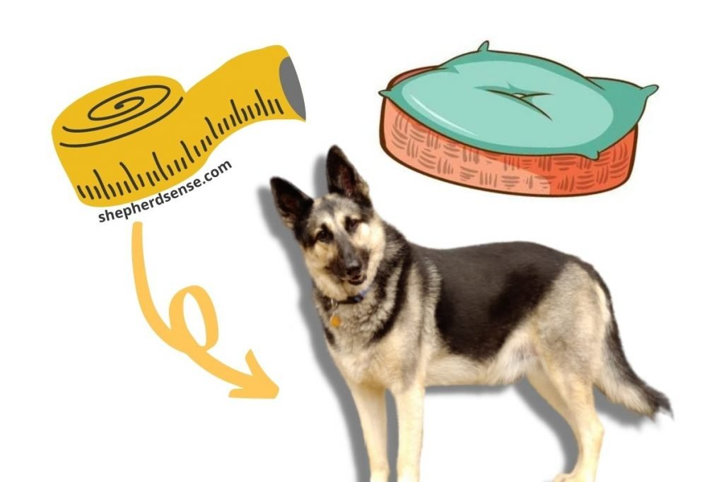 whats the best size dog bed for a german shepherd