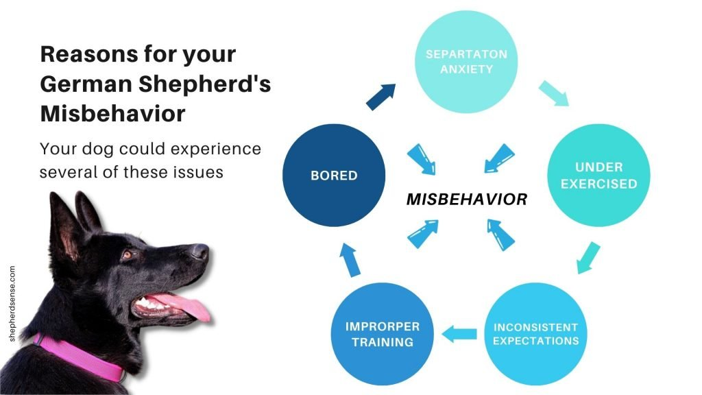 reasons for your german shepherd's misbehavior