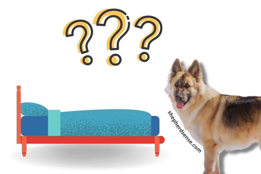 why should I buy a german shepherd dog bed