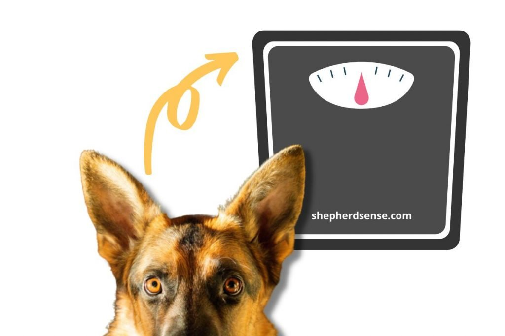 your dog's weight on their bed