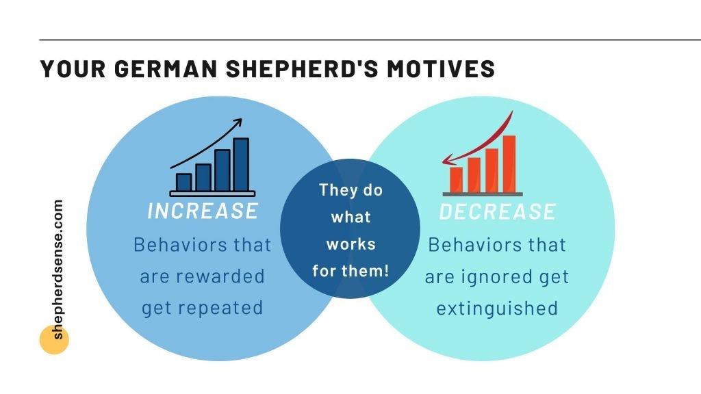 your german shepherd's motives