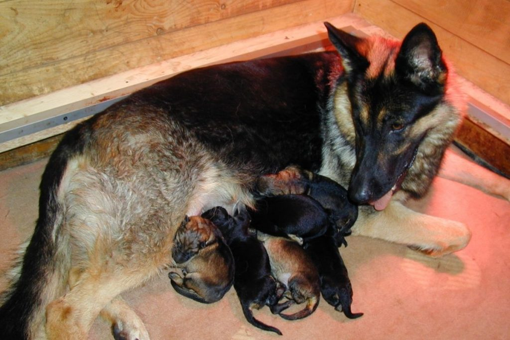 developing social behavior and bite inhibition - early puppy stage