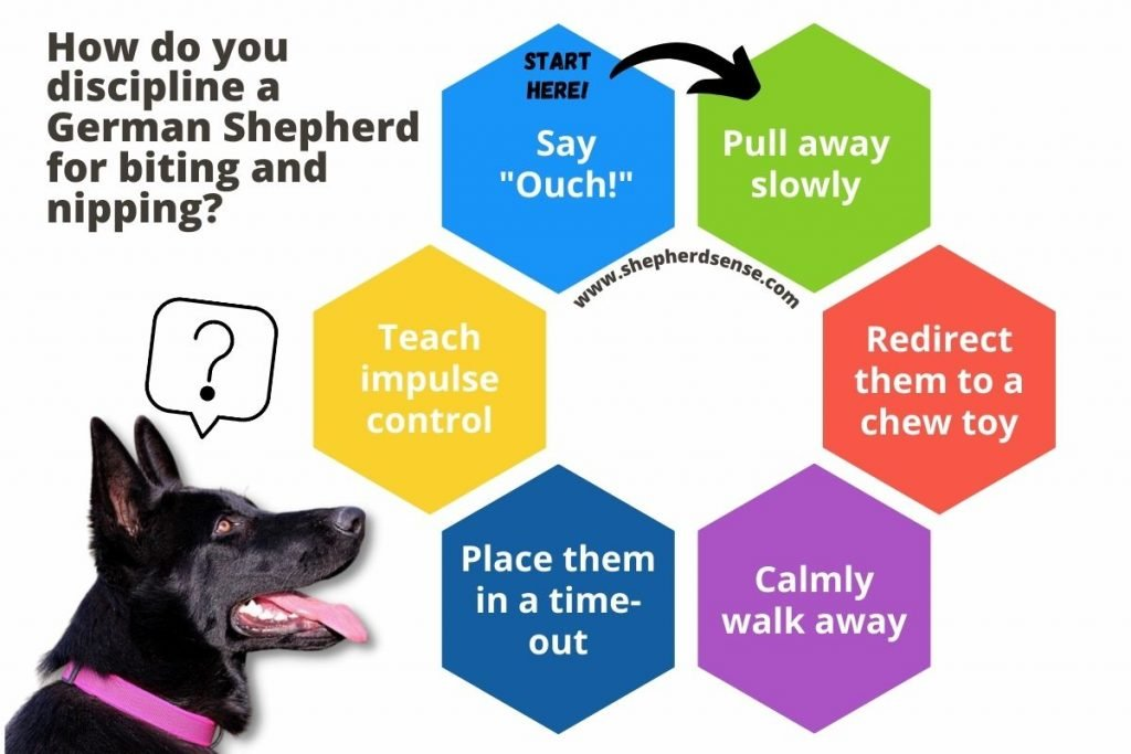 how do you discipline a german shepherd for biting and nipping