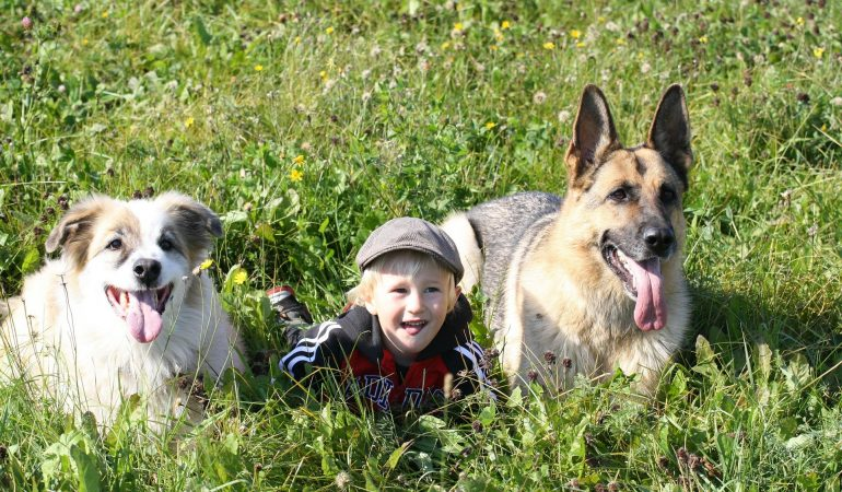 Are German Shepherds Good With Kids? (Your Worries Solved)