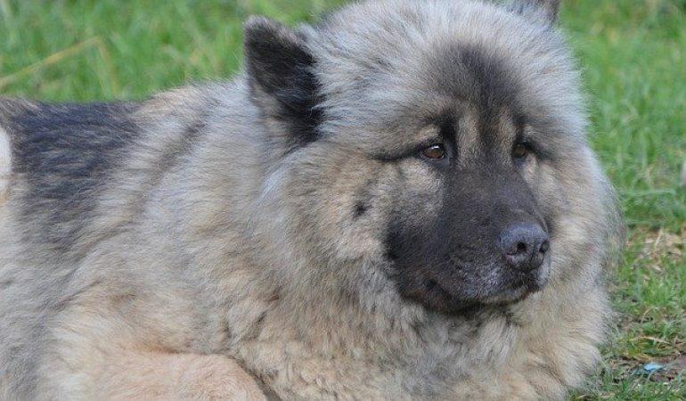 21 German Shepherd Mixes (Today's Most Popular Pups)
