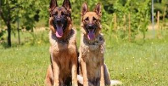 Best Male and Female German Shepherd Names (That'll Make Your Friends Jealous)