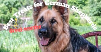 7 Best Treats for German Shepherds (Even Puppies)