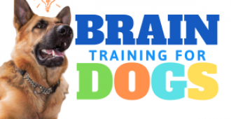 Brain Training for Dogs Review: Was it Worth My Money?